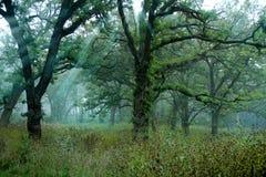 Prado escénico del bosque Imagenes de archivo