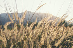 Prado Feild Outdoor Nature Background Background Fotos de archivo