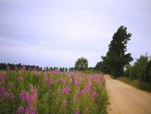 Prado, fireweed overgrown e estrada arenosa. Fotografia de Stock Royalty Free