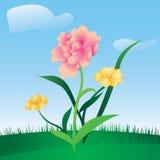 Prado floral del resorte Fotos de archivo libres de regalías