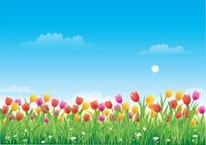 Prado floral. Tulipanes stock de ilustración