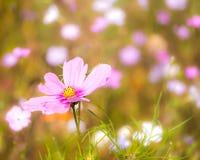 Prado floreciente del verano Imagen de archivo libre de regalías