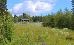 Prado floreciente idílico con varios edificios agrícolas en Vaesterbotten en Suecia fotografía de archivo