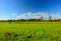 Prado, floresta e nuvens grandes verdes no céu azul - borrão e cores de contraste imagem de stock royalty free