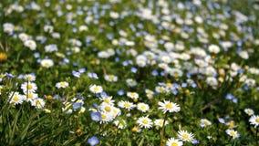 Prado florido foto de archivo