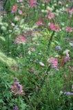 Prado florido imagen de archivo libre de regalías