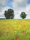 Prado florido e árvores imagem de stock