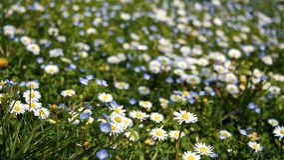 Prado Flowery foto de stock