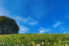 Prado gramíneo verde bonito Fotografia de Stock