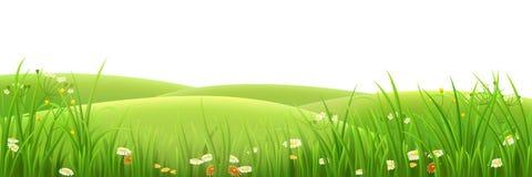Prado, grama verde e flores Fotografia de Stock Royalty Free
