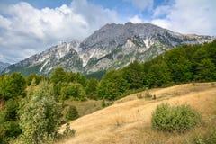 Prado grande con la hierba seca amarilla entre las montañas imagen de archivo