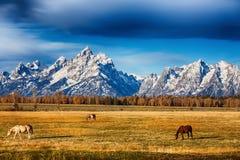 Prado grande de Teton Fotografia de Stock Royalty Free