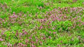 Prado herboso con las flores en la primavera metrajes