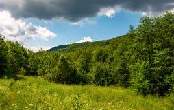 Prado herboso en bosque en un día nublado imagen de archivo