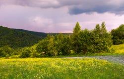 Prado herboso en la ladera foto de archivo libre de regalías