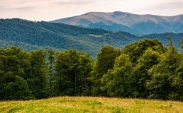 Prado herboso en la ladera boscosa de Cárpatos Imagenes de archivo