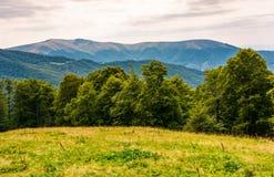 Prado herboso en la ladera boscosa de Cárpatos Fotos de archivo