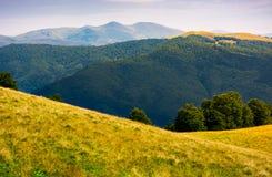 Prado herboso en la ladera de Cárpatos Fotos de archivo libres de regalías