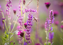 Prado hermoso con las flores salvajes Fotos de archivo libres de regalías