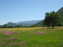 Prado hermoso con las flores salvajes, polje de la primavera de Planinsko Fotografía de archivo