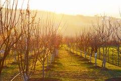 Prado hermoso con los árboles durante puesta del sol Foto de archivo libre de regalías