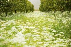 Prado hermoso de la flor en primavera rodeado por los árboles anaranjados Imagenes de archivo