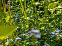 Prado hermoso de la flor en primavera foto de archivo libre de regalías