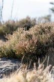 Prado hermoso de la naturaleza con la hierba de la montaña Fondo del verano foto de archivo