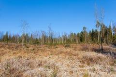 Prado hermoso del bosque en el día soleado fresco Foto de archivo libre de regalías