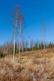 Prado hermoso del bosque en el día soleado fresco Fotos de archivo