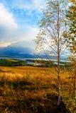 Prado hermoso del paisaje, verde y amarillo y Imagen de archivo