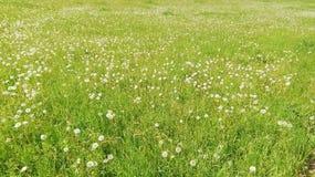 Prado hermoso en República Federal de Alemania del sur con tiempo de primavera debido de los flores imagen de archivo