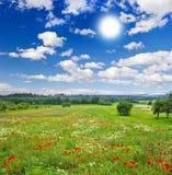 Prado hermoso y cielo azul Imagen de archivo libre de regalías