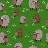 Prado inconsútil animal de las ovejas de la textura Fotografía de archivo libre de regalías