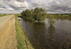 Prado inundado con los árboles Imagen de archivo libre de regalías