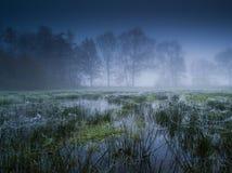 Prado inundado con niebla Imagen de archivo libre de regalías