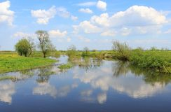 Prado inundado en primavera Imagen de archivo