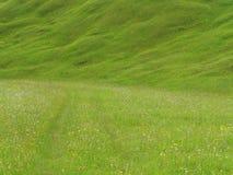 Prado luxúria no upland alpino Fotografia de Stock Royalty Free