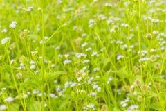 Prado minúsculo de la flor de la primavera Imagen de archivo libre de regalías