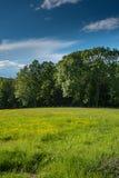 Prado na borda da floresta Imagens de Stock