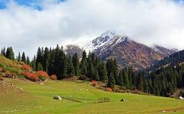 Prado nas montanhas Fotos de Stock Royalty Free