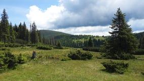 Prado nas montanhas Fotografia de Stock