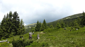 Prado nas montanhas Fotografia de Stock Royalty Free
