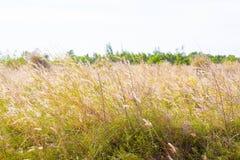 Prado natural bonito no fundo da luz solar Imagem de Stock