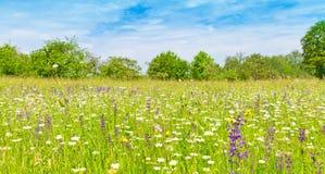 Prado natural con las hierbas y las flores en primavera Foto de archivo libre de regalías