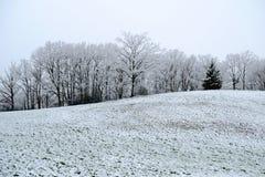 Prado nevado do rolamento com agora sobre as árvores no fundo Imagens de Stock