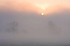 Prado no por do sol com sol e névoa Fotos de Stock Royalty Free