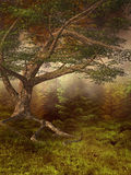 Prado otoñal Imagenes de archivo