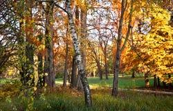 Prado otoñal hermoso en bosque en la luz del día Día coloreado brillante de la caída en el bosque Paisaje del bosque a finales de Imagenes de archivo