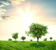 Prado panorâmico com árvores Fotos de Stock